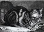 Cornelis Visscher (1629-58), The Large Cat